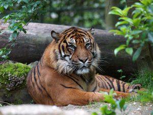 parrainage-zoo-de-beauval
