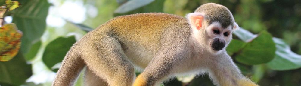 département zoo de beauval