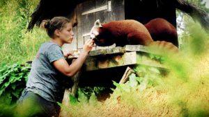 Tournage et diffusion Saison au Zoo