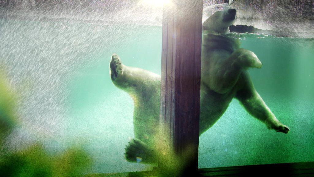 quel-zoo-saison-au-zoo-france-4-quelle-chaine