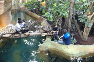 Reportage Zoo de Beauval M6 Zone interdite dome tropical