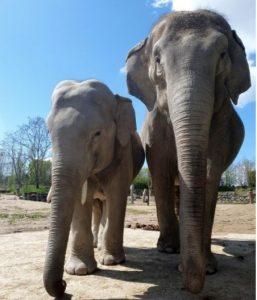 bébé éléphant à voir au zoo le pal